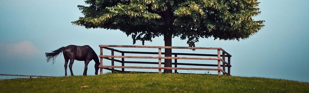 Cheval arbre